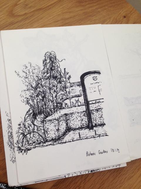 Garden sketch - Botanic Gardens