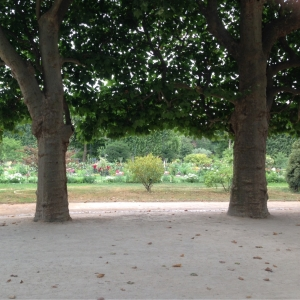 Garden beds of the Jardin des Plantes glimpsed through an avenue of trees